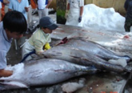 Tuna export showed fast growth
